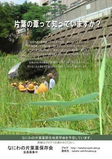 片葉の葦2014-04-10.jpg