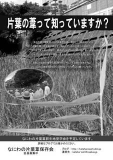 片葉の葦2014-04-10mono.jpg