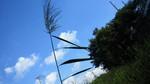 片葉の葦 2012.09.19..jpg
