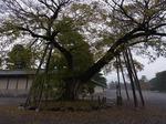 20131125cx京都御苑 034.jpg