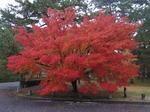 20131125cx京都御苑 061.jpg
